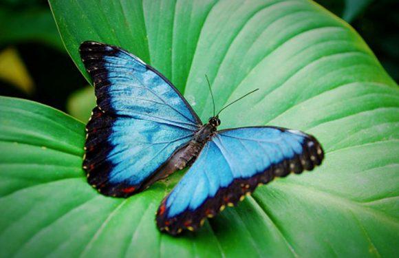 Motýlci – 8. třída