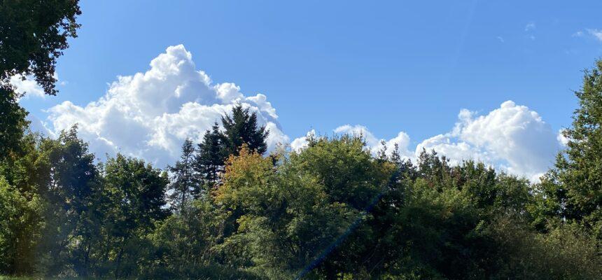 Výprava Lišáků do lesa